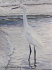 Snowy Egret in Waves
